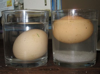 Floating Eggs
